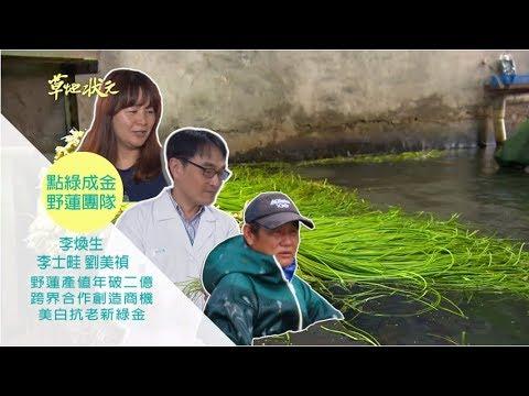 台灣-草地狀元-20180702 2/2 綠金變黃金野蓮特攻隊
