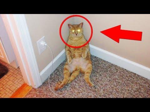 Что сделал этот кот, никто не поверил! Телепортация или монтаж? Животные - телепортация. Подборка