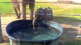 [What Else Is A Baby Elephant Supposed To Do With A Trunk] Video