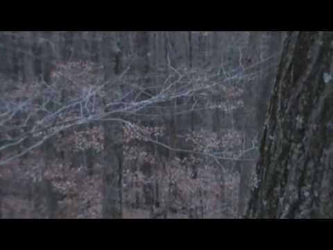 (Listen) Fly Down Cackle live West Virginia Wild Turkey morning