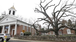 Final Bow for Beloved 600-Year-Old Tree