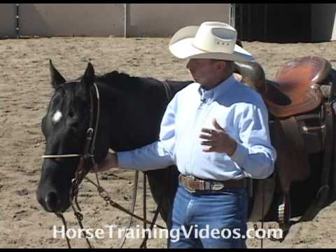 Horse Training Tips - Using A HeadSetter, part 1