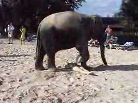 YOU WILL LOVE THIS ELEPHANT!!!  THAILAND