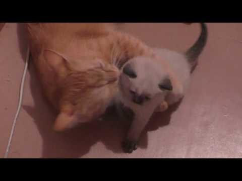 Кошка Ласка и ее котенок Зефирка/3 часть