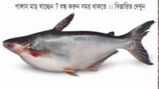 পাঙ্গাস মাছ খাচ্ছেন ? বন্ধ করুন সময় থাকতে ।। বিস্তারিত দেখুন !!