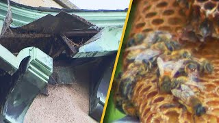 Man Reportedly Finds 50,000 Bees in Apartment Building