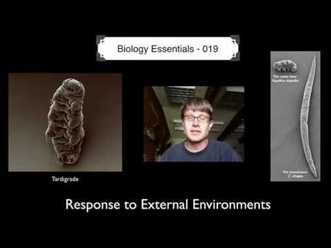 Response to External Environments