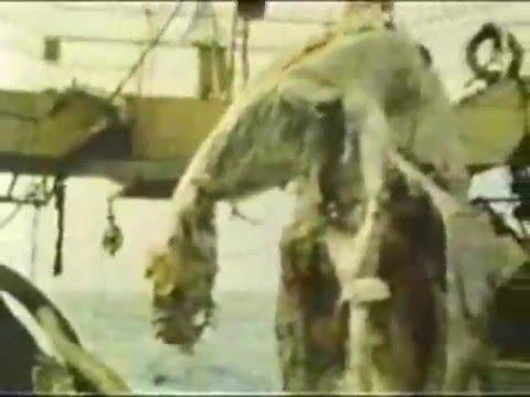 Drangon gigante encontrado en el mar de Japon INCREIBLE
