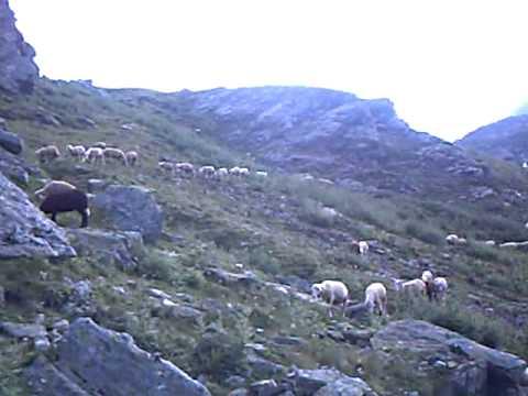 delet e sharrit