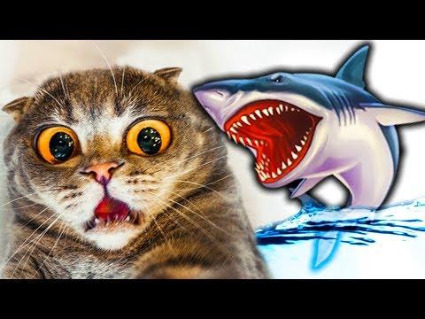 #4 КОТЕНОК РЫБОЛОВ симулятор кошачьей рыбалки АКУЛА утащила мою рыбу детский летсплей от фгтв
