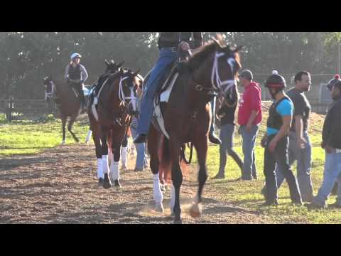 Kentucky Derby 141: Ep. 6 - Top Ranked Horses 60 Days from Derby