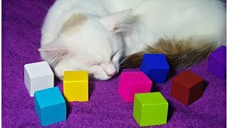 Play and Learn Colours with REAL Cat & Cubes for Kids - Fun Learning Videos For Children