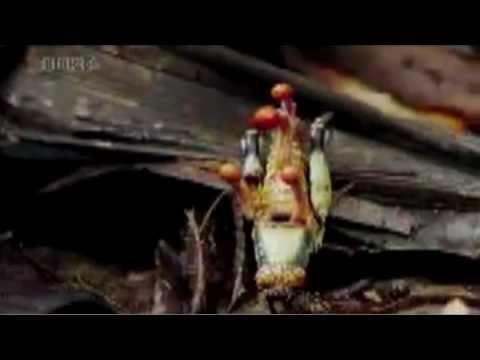 Folge 03: Sarrazin und Ameisen-Zombies