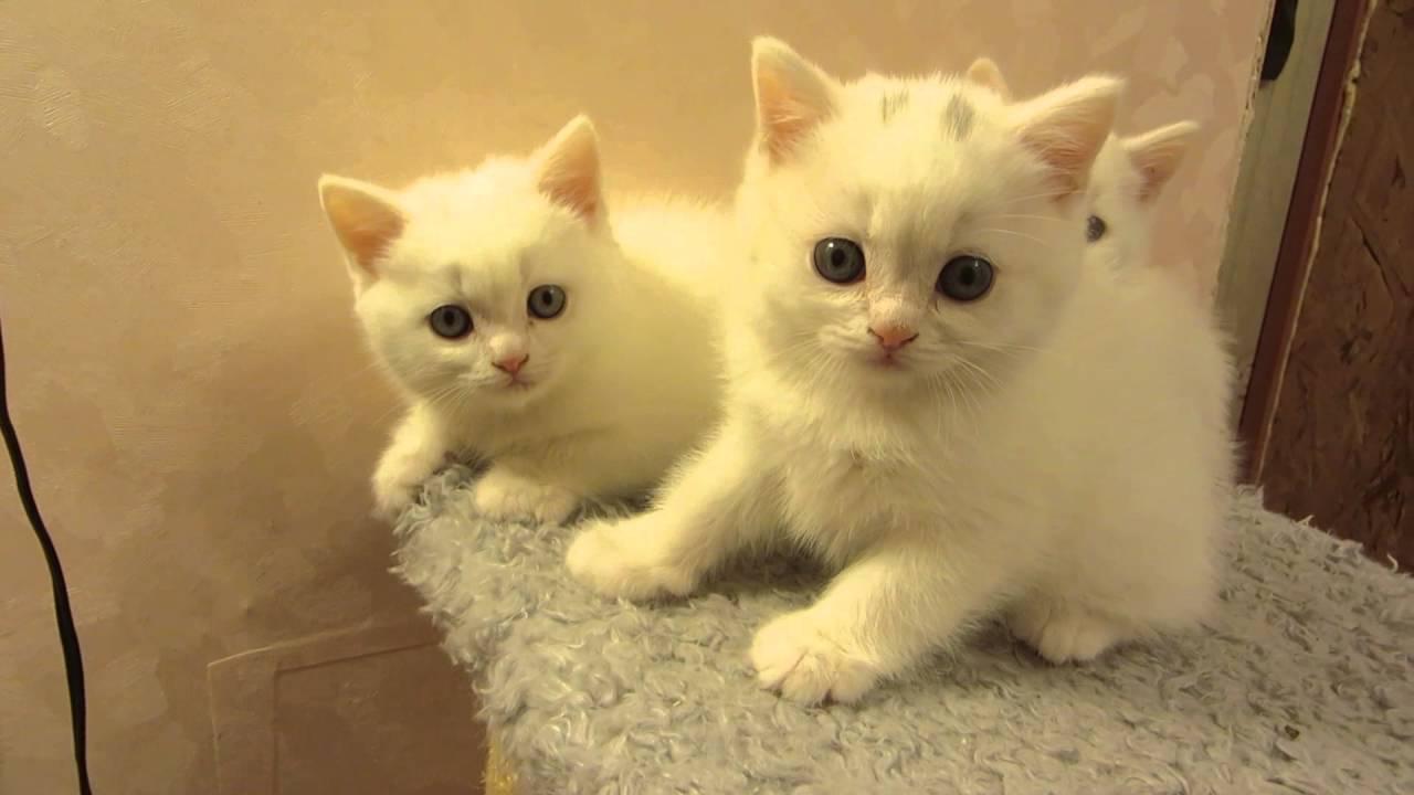 картинки котёнки маленькие