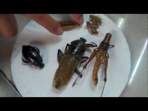 Eating Bugs in Thailand!