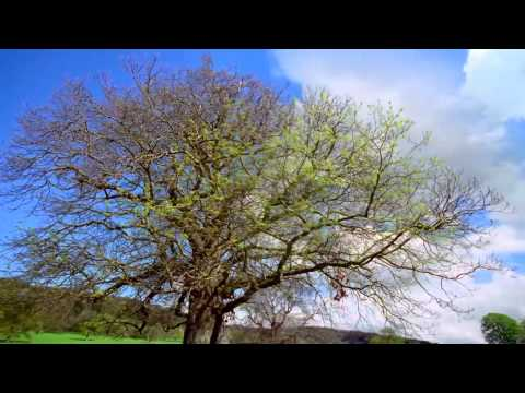 Spring (Audiomachine - Sol Invictus video clip)