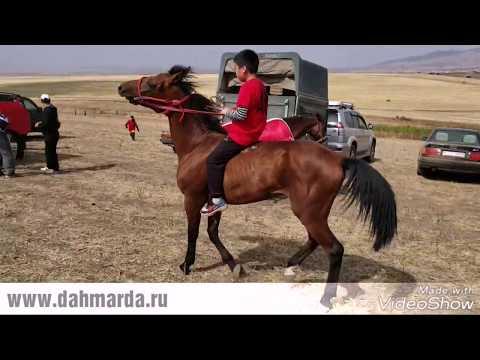 Скачки в ауле Коктюбе, под Курдаем, Казахстан