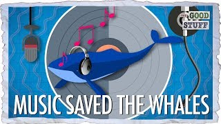 How We Saved the Whales (With Pop Music)