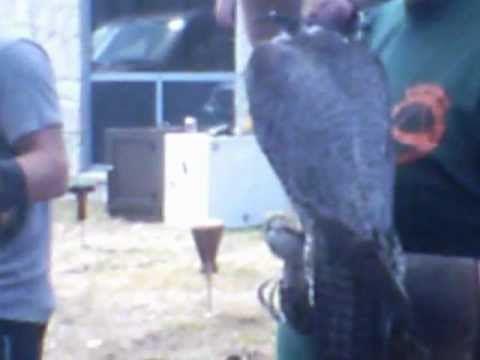 New Hampshire Fish and Game Event.wmv