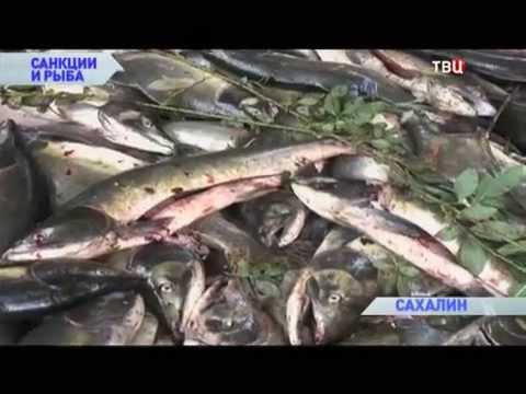 Санкции и рыба. Без обмана