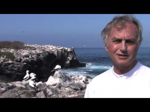 Richard Dawkins: Insurance Policy: Two Eggs, One Survivor