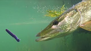 How To Catch Fish Anywhere w/ the Ned Rig | Field Trips New York