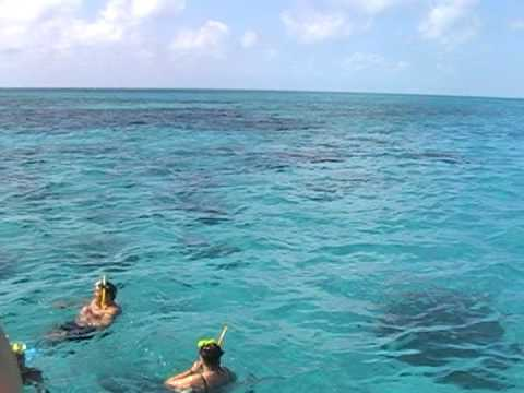 Coral Reef, Cuba, Caribbean sea