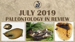 New Dinosaurs and Fossils from July 2019