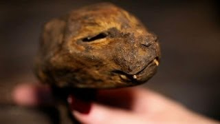 Lucy The Mummified Cat | Oddities: San Francisco