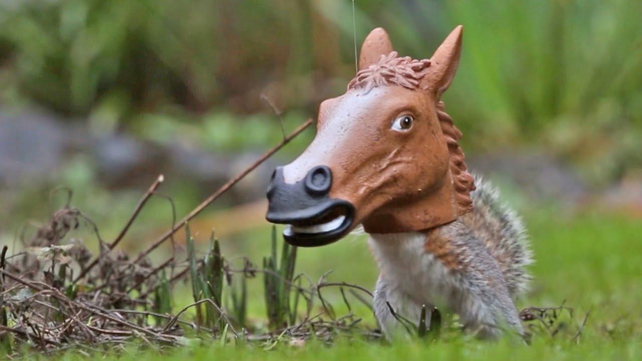 Wiewiór z końską głową :D