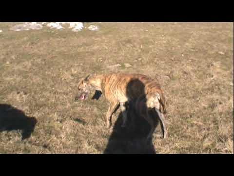 Galgos y Liebres 2011 Parte 4