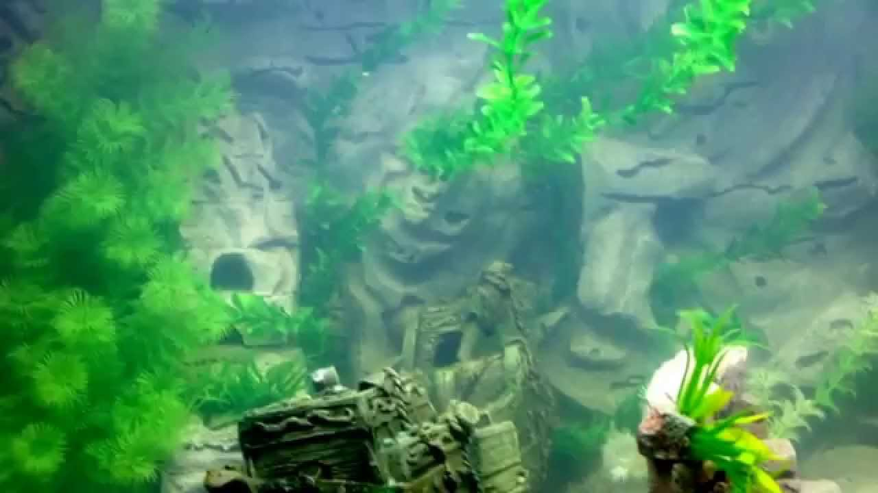 Acquario fai da te youtube for Impianto co2 acquario fai da te