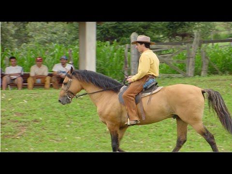 Clique e veja o vídeo Curso Aprenda a Montar e Lidar com Cavalos