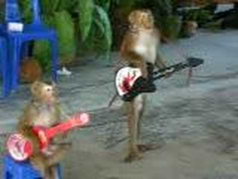 Thai Monkey guitarist