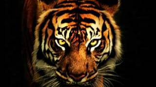 Survivor - Eye Of The Tiger (with lyrics) music video kia is a fat black dog and he isapy not tat h
