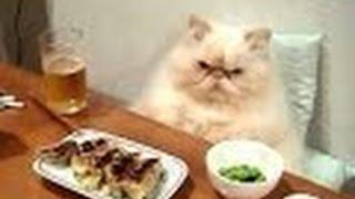 Perros Y Gatos Divertidos De Actuar Como Humanos