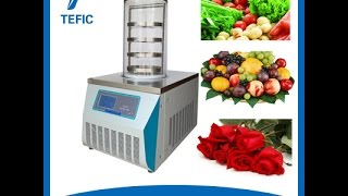 TEFIC TF 10A lab or home use vacuum freeze dryer lyophilizer