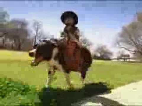 taco john starring whiplash the cowboy monkey