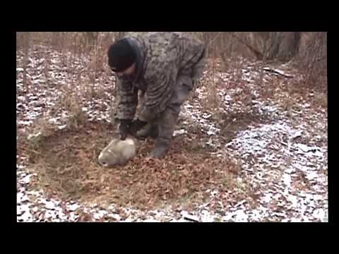 Winter Raccoon Trapping in Late Season Snow, Ice, and Rain