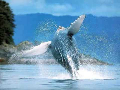 Pearl Jam - WHALE SONG