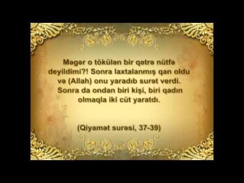 Quran mocuzeleri II bolum 11 Hisse Usagin cinsiyyeti