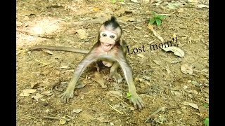 Break Heart! Baby Faura Lost Mom Fauna Cry Loudly & Run So Fast  Find Mom So Pity Baby Faura