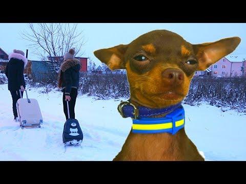 Принц не хочет жить в отеле для собак Диана и Капа спешат на самолет