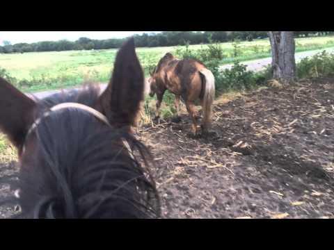 Muddy Buddy - My Horse Is Scare of Mud, Why? Horses Walking in Mud Dangers