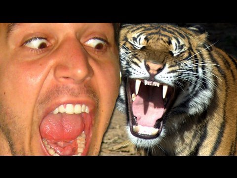 I Fought A Tiger! (6.8.09 - Day 39)