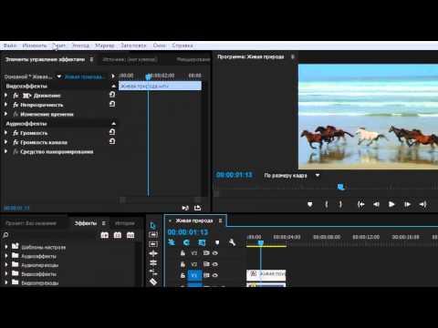 Как сделать стоп кадр (Adobe Premiere Pro CC) - YouTube