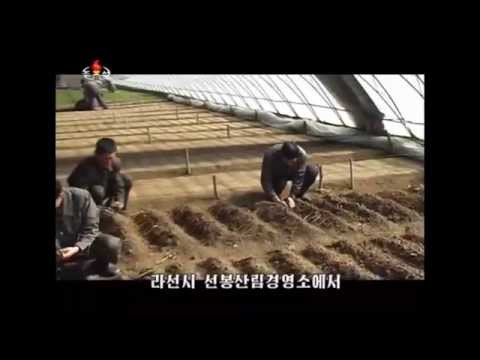 North Korea Television - Intelsat 21 @ C Band