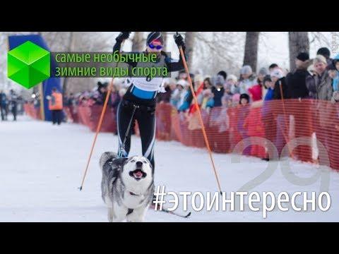 #этоинтересно | Выпуск 29: Зимние виды спорта
