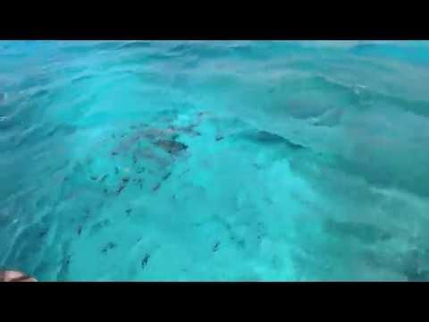 Кормим рыбок с катера (Египет, Дахаб, отель Ибис стайл Дахаб лагун / Ibis Styles Dahab Lagoon)