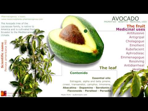 Avocado benefits. Avocado tree, fruit, seed, leaves and health